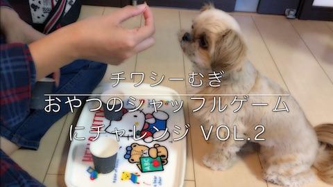 ミックス犬 チワシーむぎ 「おやつのシャッフルゲームにチャレンジ Vol.2」