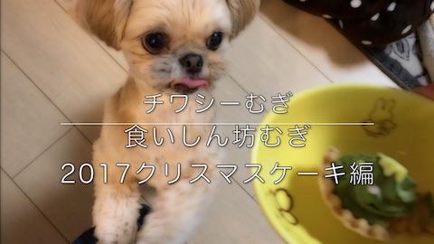 ミックス犬 チワシーむぎ 「食いしん坊むぎ 2017クリスマスケーキ編」