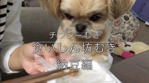 チワシーむぎ 「食いしん坊むぎ 納豆編」