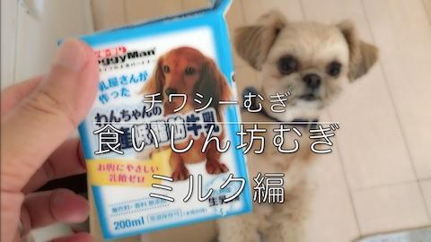 チワシーむぎ「食いしん坊むぎ ミルク編」