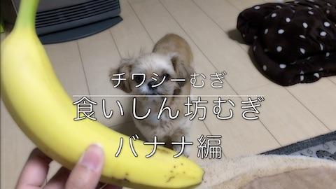 チワシーむぎ「食いしん坊むぎ バナナ編」