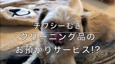 チワシーむぎ「クリーニング品のお預かりサービス!?」