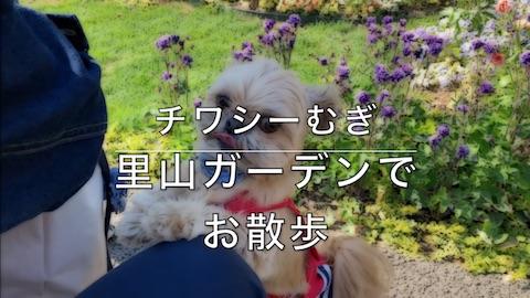 チワシーむぎ「横浜市旭区 里山ガーデンでお散歩」