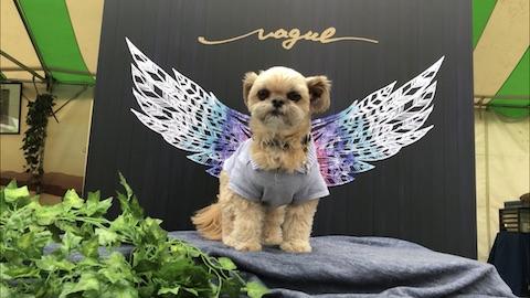 わんわんカーニバルに出店していたVagueの「天使の羽」スポットで撮影