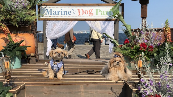 「Marine Dog Party」のフォトスポットで記念撮影a