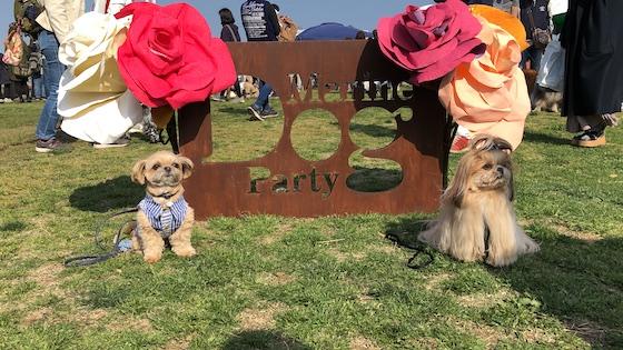 「Marine Dog Party」のフォトスポットで記念撮影b