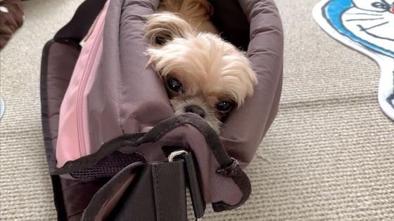 キャリーバッグに入って準備OK!