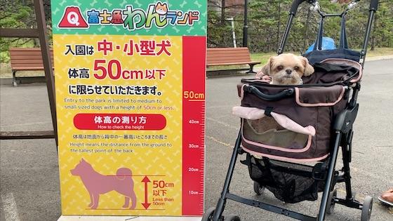 体高50センチ以下の中小型犬は入園可能