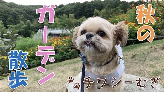 チワシーむぎ「ガーデン散歩!里山ガーデン 秋編」