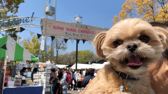 チワシーむぎ「【犬イベント】わんわんカーニバル2019 代々木公園」