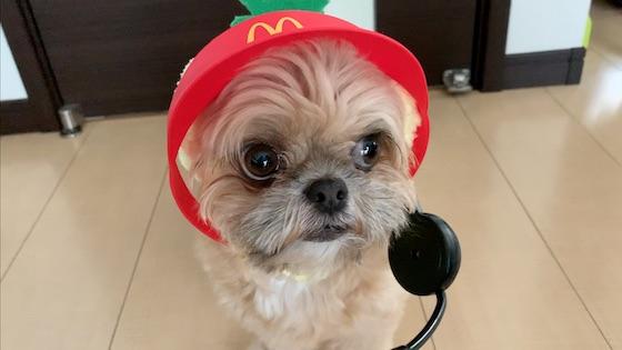 チワシーむぎ「マクドナルドのお店屋さんごっこ!? お仕事の後のご褒美は…」