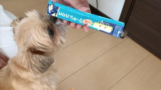 チワシーむぎ「【犬用ちゅ〜る】CIAO水分補給ちゅーるをあげてみた♪」